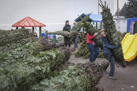 This November, volunteers unload Christmas trees at a YMCA in Idaho.