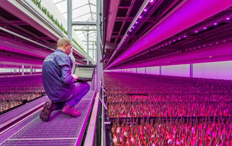 Vertical farming could be end to world hunger