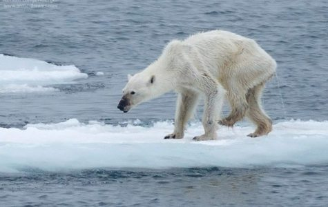 Warning wildlife of global warming