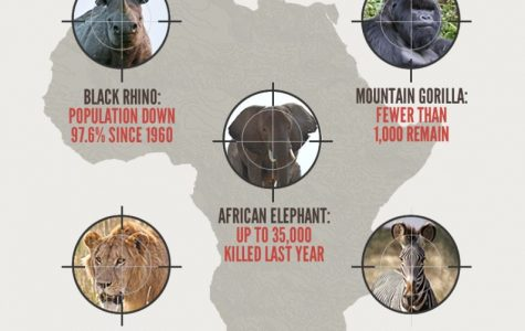 Animal Poaching is taking a toll on population rates
