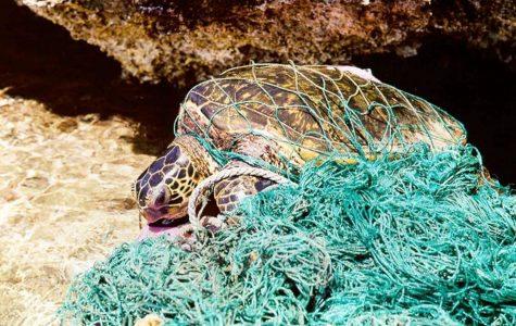 Pollution impacts, dangers world's ocean, marine life