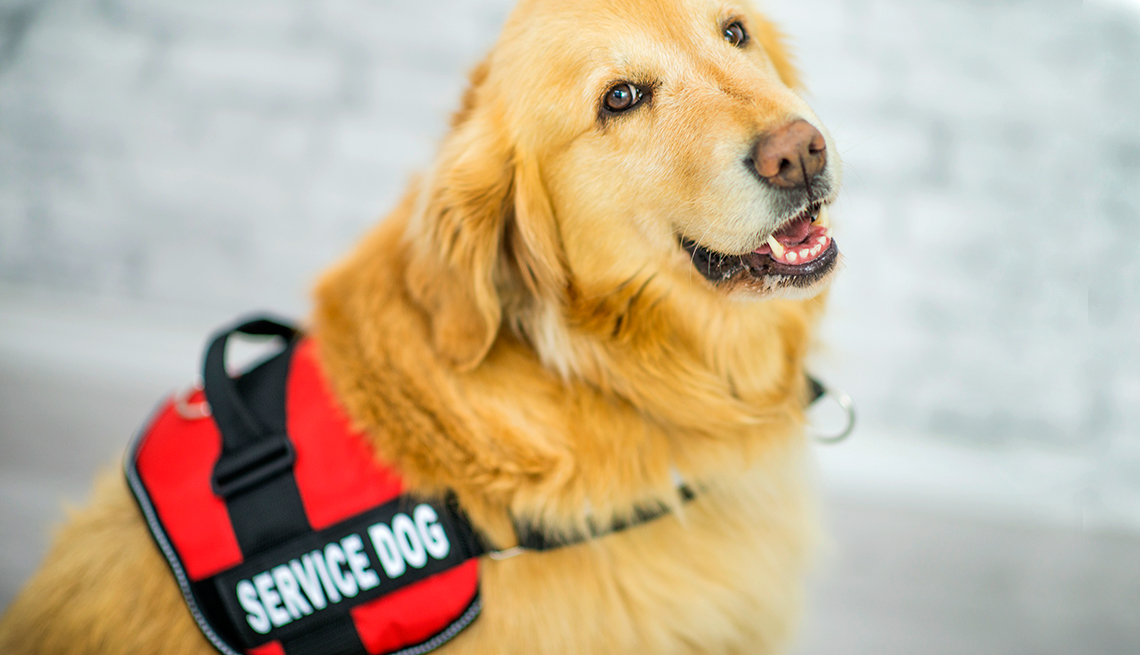 About 89.7 million dogs live in the United States; around 500,000 of those dogs are service dogs.