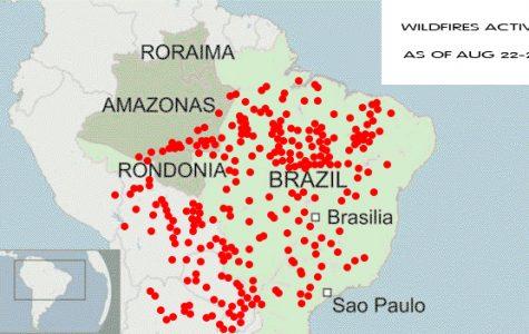 Amazon Rainforest Aftermath